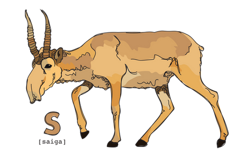 S is for Saiga