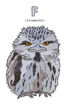 F is for Frogmouth