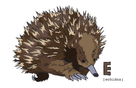 E is for Echidna
