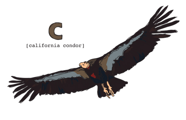 C is for California Condor