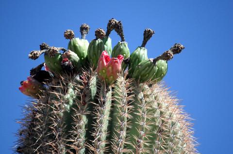 Desert in Spring time