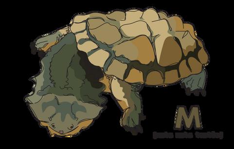 M is for Mata Mata Turle