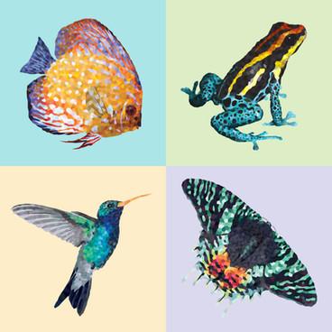 Colibri Frog Fishie Moth