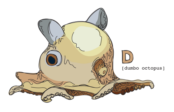D is for Dumbo Octopus