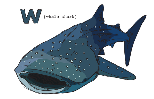 W is for Whale Shark