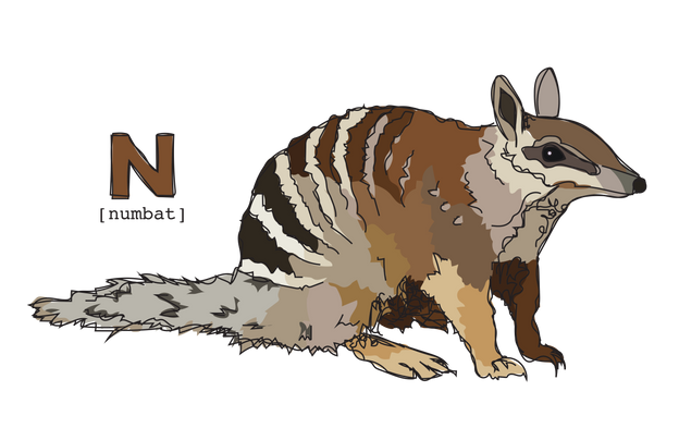 N is for Numbat