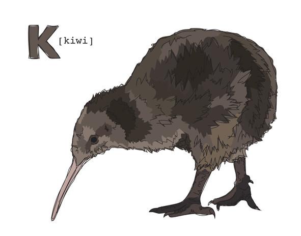 Runner Up: K is for Kiwi Bird