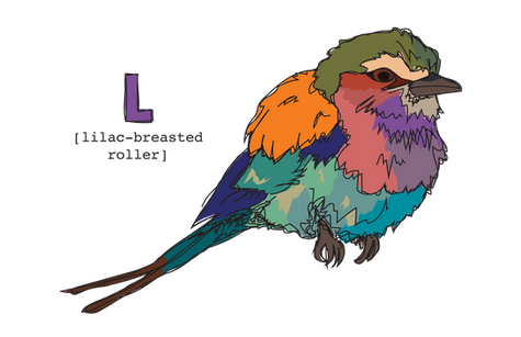 L is for Lilac-breasted Roller