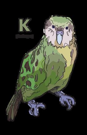 K is for Kakapo