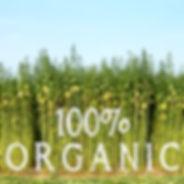 Organic fabrics hemp cotton
