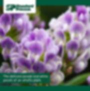 farm-photo-720px-43.jpg