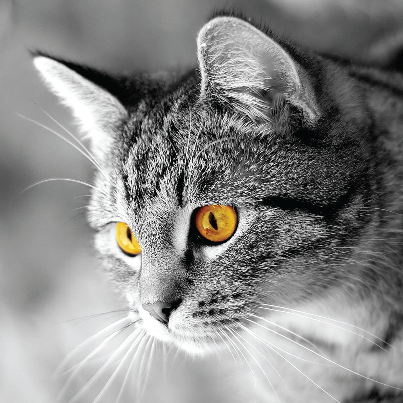 Street Cat Foundation