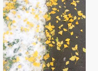 街の色。街に馴染む色。