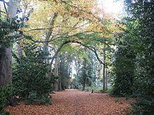Woodhall Spa Pine Woods