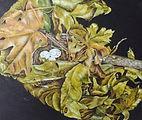 Birds-Nest-closer-view.jpg