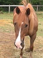 Panama eating hay.jpg