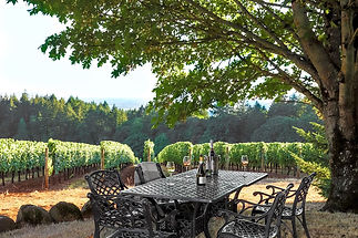 PIC-DS vineyard.jpg