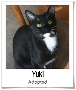 Yuki.png