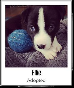 Ellie.png