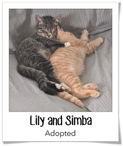 Lily&Simba.png