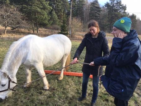 Hästbesök på skolan