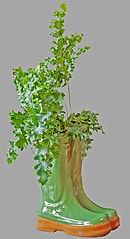 Class 36 Teresa Welch - A Foliage Plant.