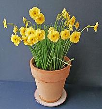 Class 18 Teresa Welch A pot of flowering