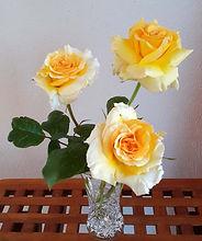 Class 3 Sue Goodsall 3 ht roses - grosve