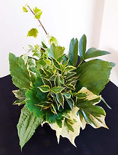 Class 19 Sue Goodsall foliage arr.jpg