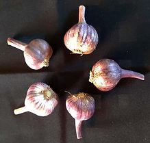 Class 34 Sue Goodsall garlic.jpg