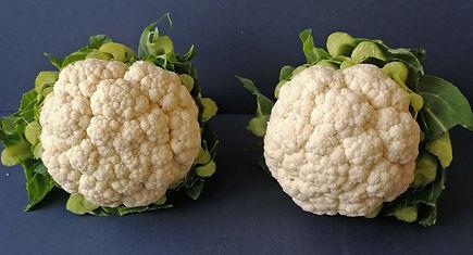 Class 38 Teresa Welch - Two Cauliflowers