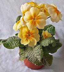 Class 35 Ian Parsons - Flowering pot.jpg