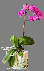 Class 35 Teresa Welch - A Flowering Plan