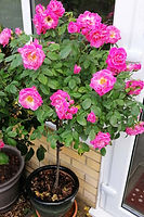 Class 11 Teresa Welch Flowering Bush.jpg