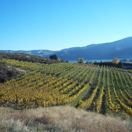Drink Like A Fish:  Lake Chelan's Hard Row to Hoe Vineyards is certified Salmon-Safe