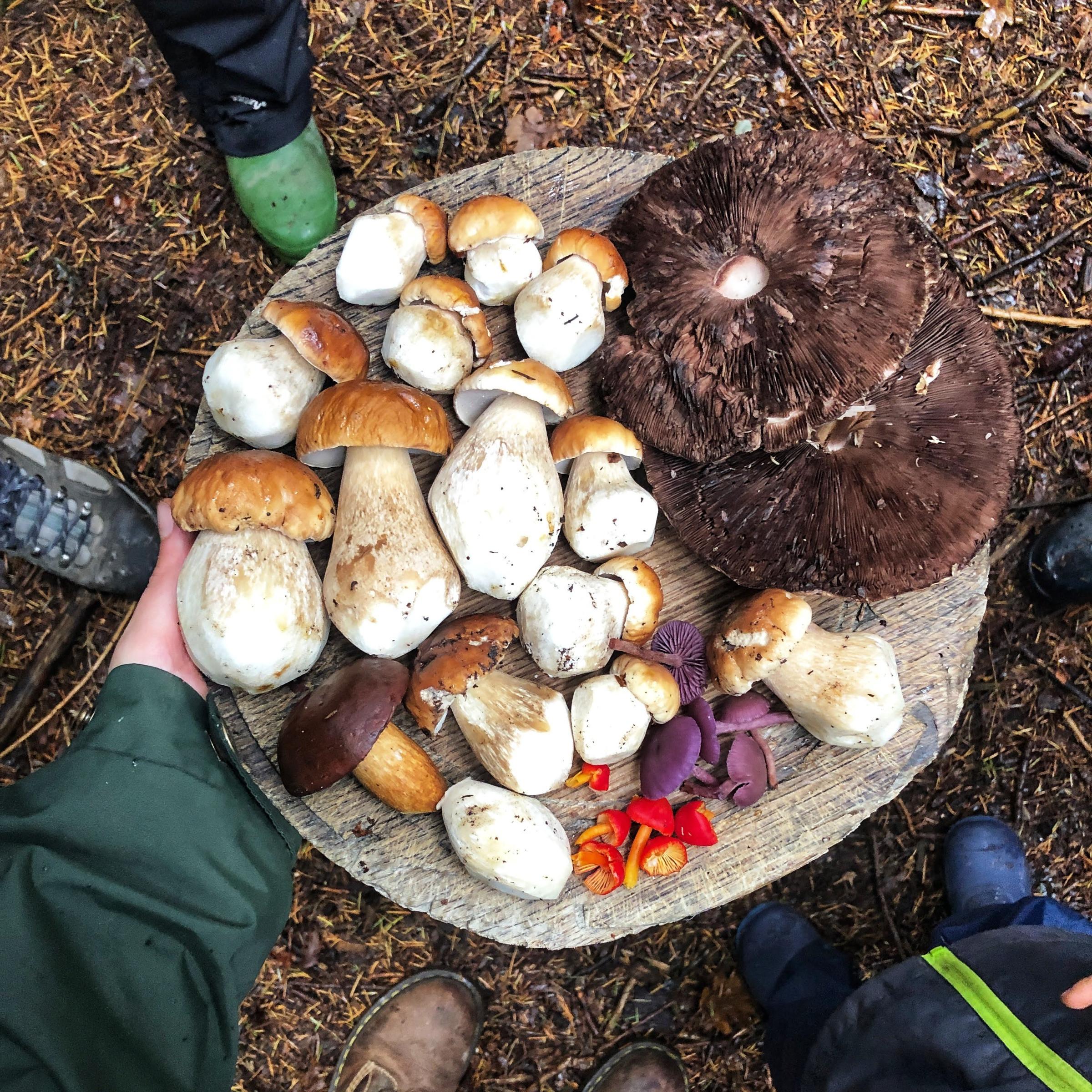 Mushroom Hunting Workshop