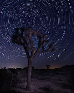 Johua Tree Star Trails