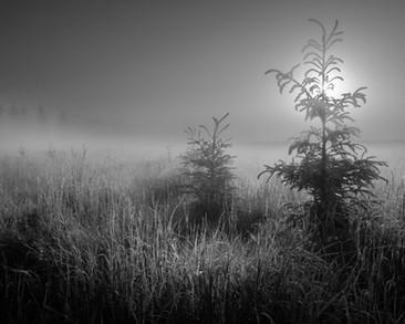 River Lot 56 Foggy Morning