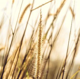 photo-of-brown-plant-699411.jpg