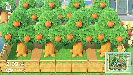 Orange Grove 1.JPG