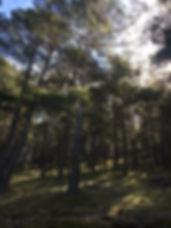 Casa Rural Abantos | Bosque alrededores | Sierra de Gúdar | Rubielos de Mora | Teruel