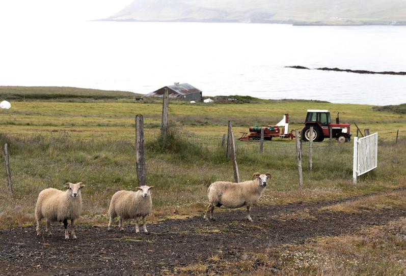 Walk ahead, stranger, Iceland