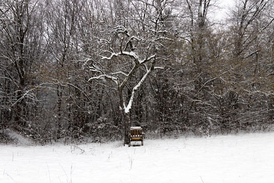 Bees resting on a chair under a tree during winter, Austria