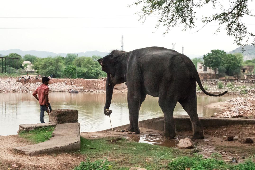 Shower time, Jaipur, India