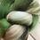 Thumbnail: Woodland Greens Merino Roving