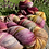 Thumbnail: Secret Garden DK Yarn