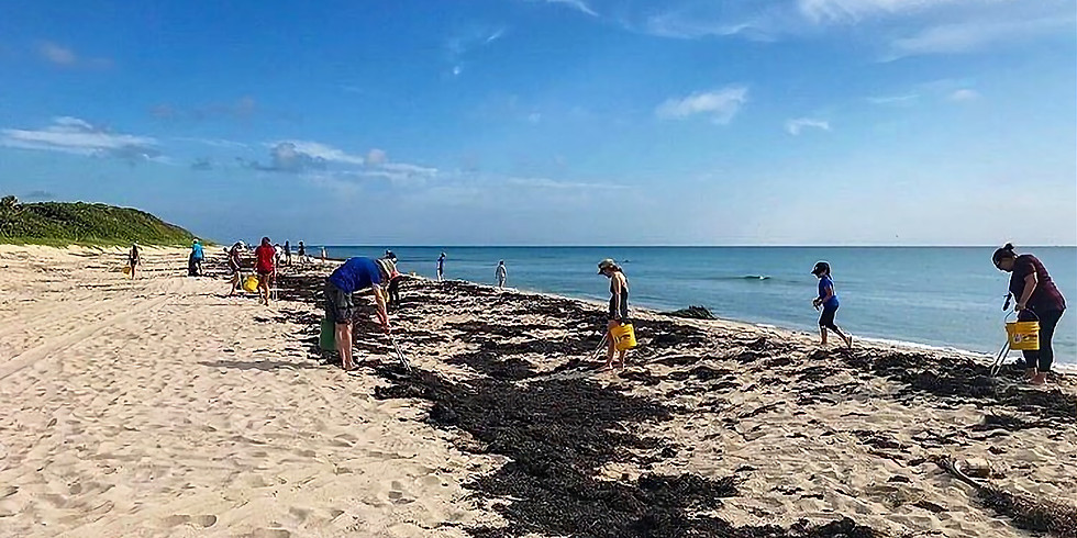 Turtle Tuesday Beach Clean Up