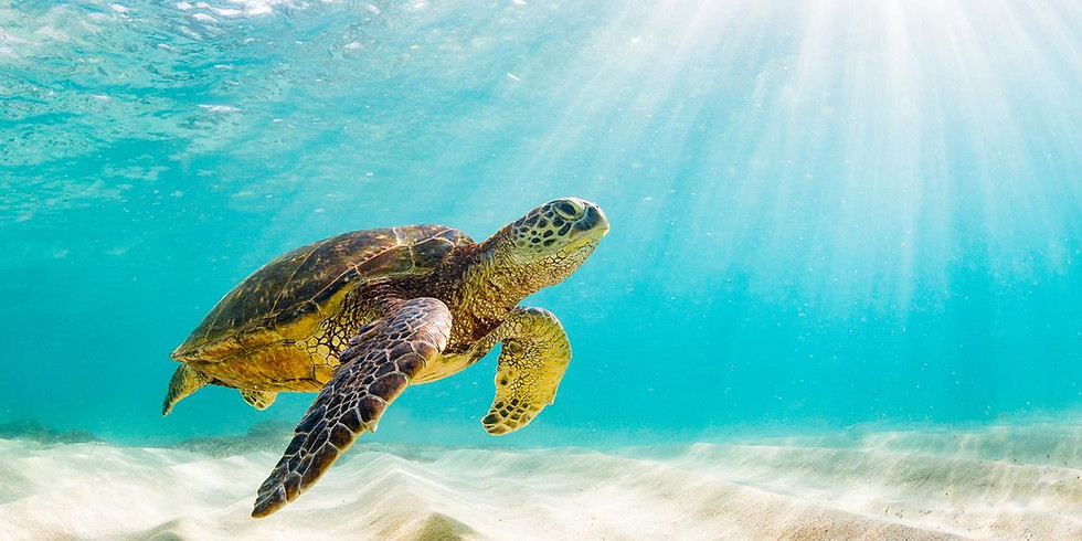 Turtle Tuesday Beach Cleanup