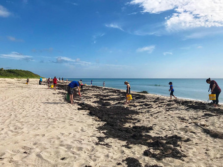 MacArthur Beach State Park, Beach Cleanup