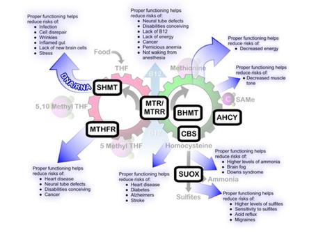 The Dangers of Ignoring an MTHFR Mutation